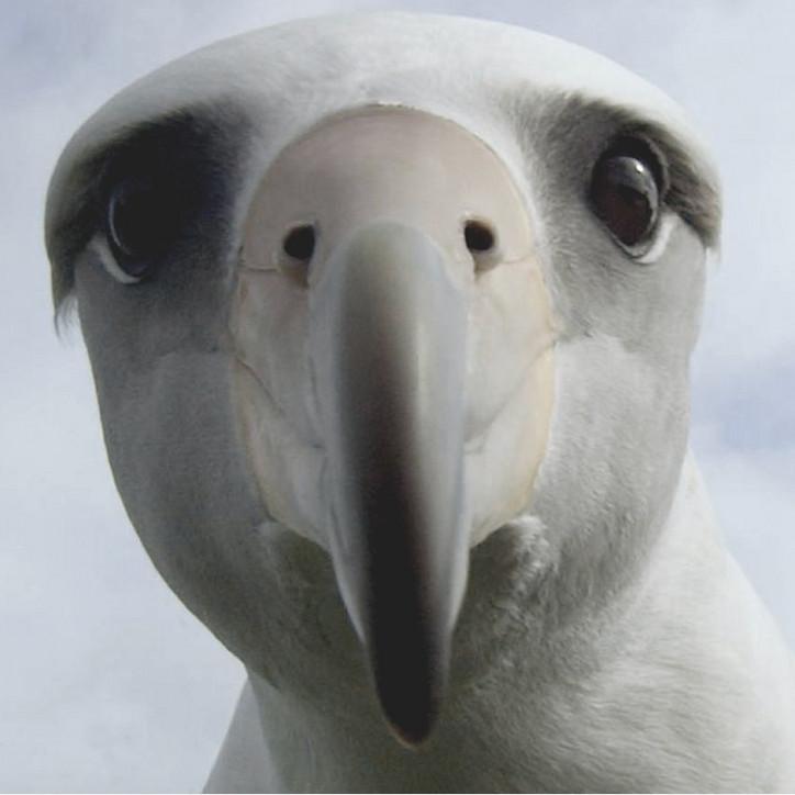 Albatross Office Magazine